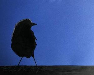 Robin of Lockdown